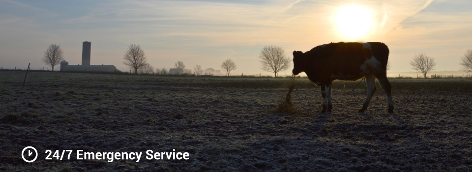 24/7 Emergency Service - Silhouette of a cow and farmlands